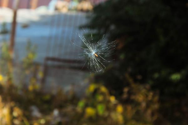Осенние зарисовки или как я гонялась за пушинками Фото, Осень, Canon 600D