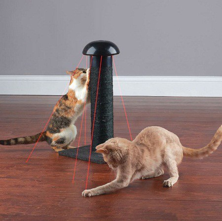 Does cats scratch furniture