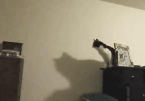 Подготовка к прыжку