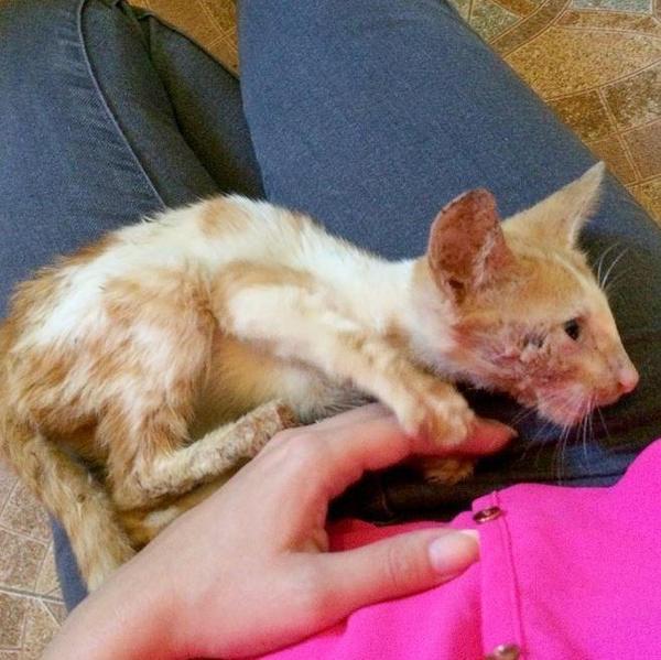 полимерной как усыпляют кошек в ветклиниках продаже Газелей