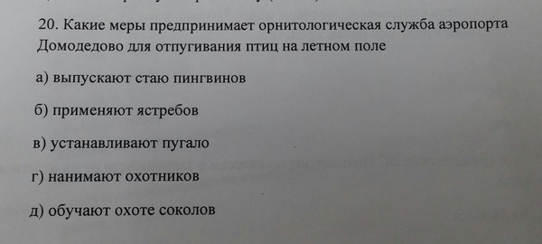 Пингвины на страже Домодедово!