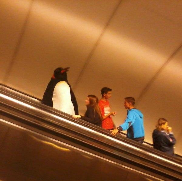 В Петербургском метро пингвины, метро, Санкт-Петербург, работа