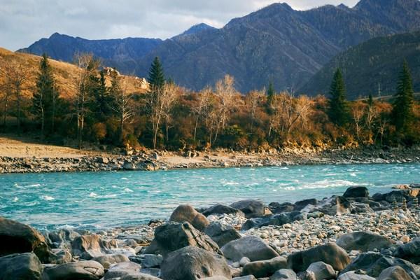Золотая осень на Алтае Алтай, Осень, Алтайские горы, Осень золотая, Горы, Чуя, Катунь, Вода