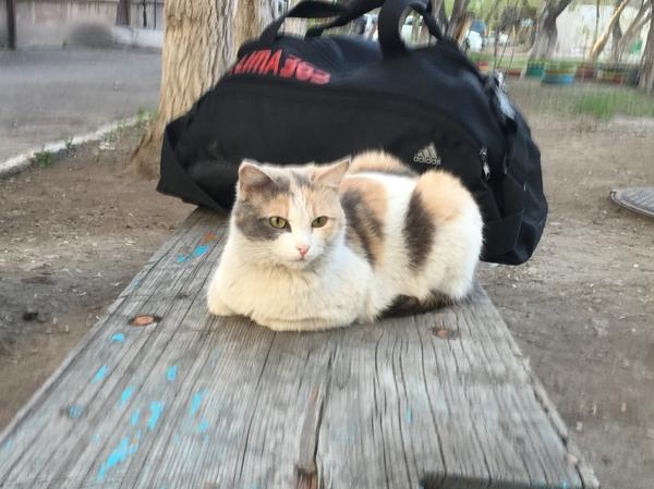 Спортивный котик Кот, Спорт