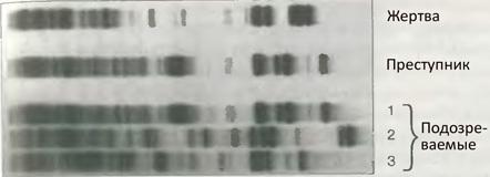 30 лет ДНК-дактилоскопии Криминалистика, Биология, Длиннопост, Изнасилование, Убийство, Днк-Тест, Преступление