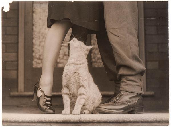 Опознали кота Кот, Опознание