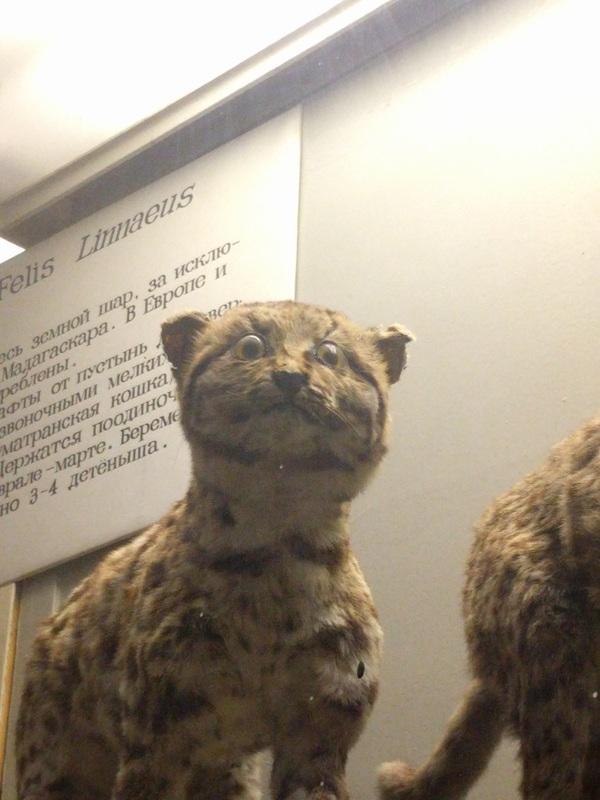 Сборная зоологического музея по покеру музей, таксидермия, упоротость, длиннопост