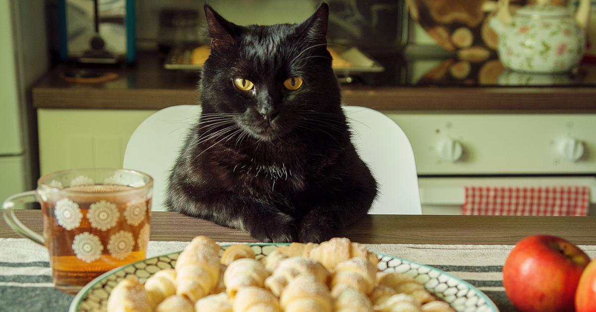 Прикольные картинки с котами и едой