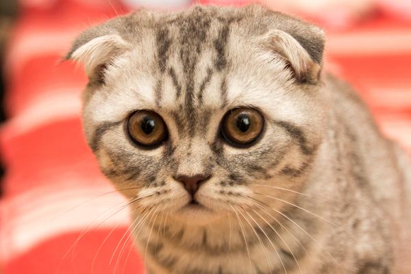 Мой котенок. Кот, Фото, Моё