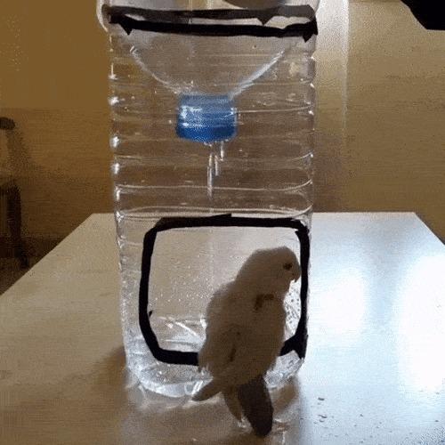 Освежающий душ для милого попугайчика
