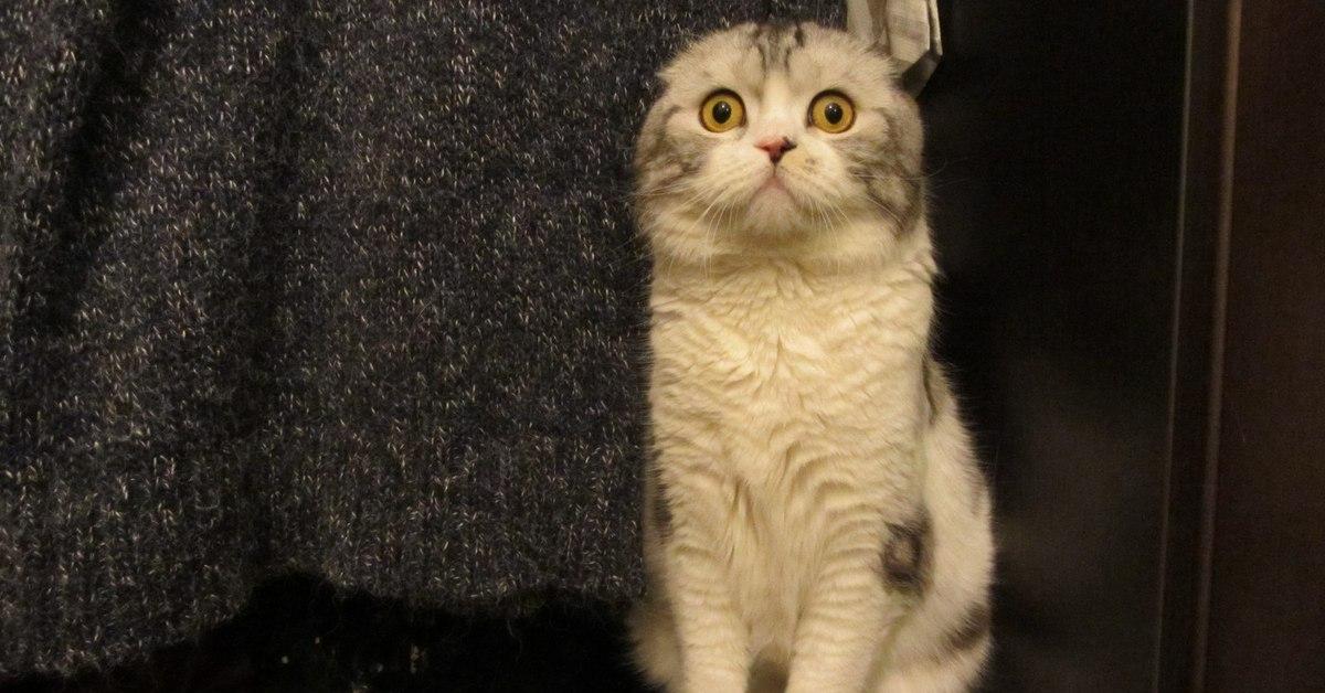 Харкает кот