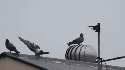 K-eke GIF's 2 k-Eke, Гифка, Птицы, Длиннопост
