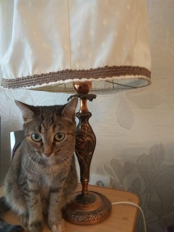Мое котэ с лампой