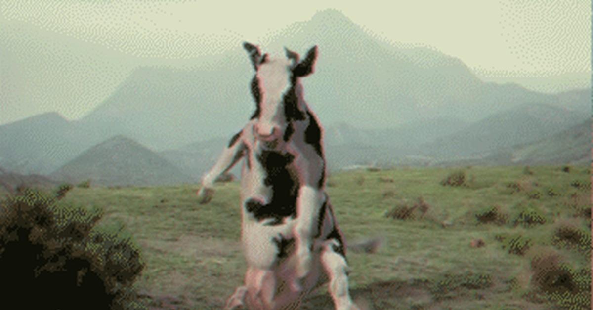 гифка с коровой шатающейся