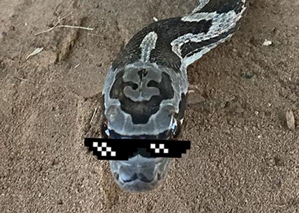 Эта змея-хипстер родилась с усами и в солнечных очках Змея, Усы, Deal with it