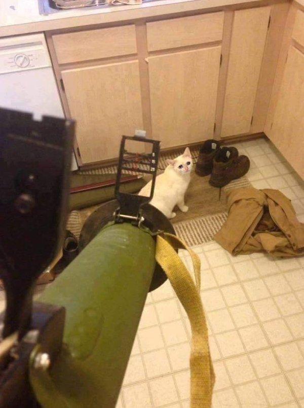 Когда кот наделал в берцы...