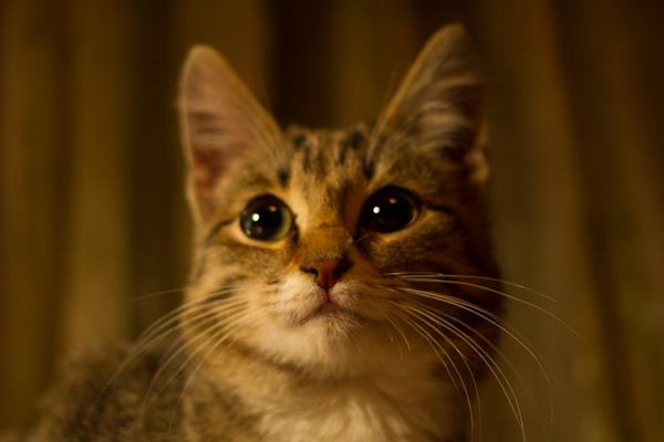 Меньшие нуждаются в помощи Кот, Помощь, Животные, Длиннопост
