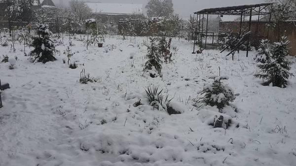 Первый снег в Ереване Снег, Ереван, Армения, Видео, Длиннопост