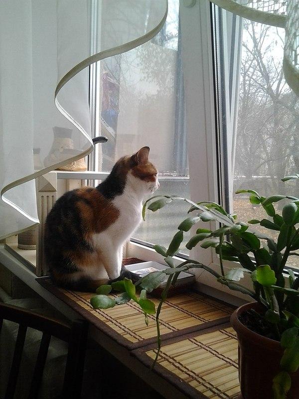 Раз тут любят котиков...Мои животные кот, Животные, Любовь, длиннопост