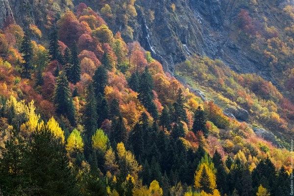 Золотая осень в горах Домбая Домбай, Северный Кавказ, Россия, Фото, Природа, осень, горы, надо съездить, длиннопост