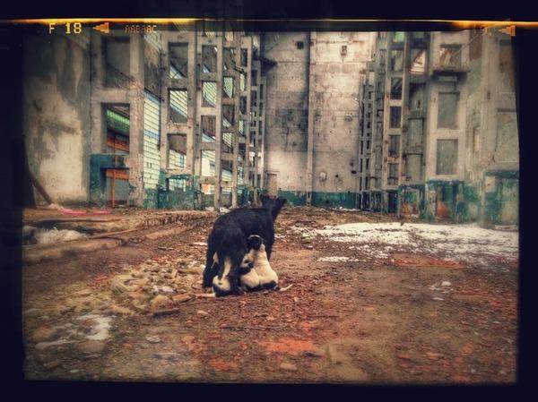 Атмосферное фото заброшенного завода и живущей в нем семьи (собак) Фото, Заброшенное, Заброшенное место, Собака, Щенки, Казань, Урбанфото, Длиннопост