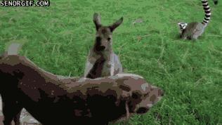 Гопники в животном мире