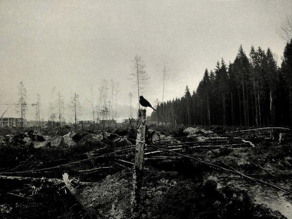 Тот момент, когда прилетел в лес, а леса нет.. Строительство, Поле, Лес, Птицы, Ленинградская область, Пасмурно