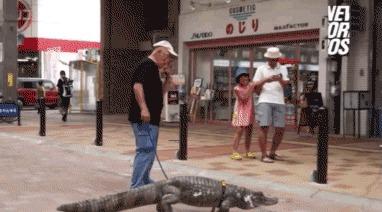 Своя атмосфера Аллигатор, Крокодил, Кайман, Пресмыкающиеся, Гифка