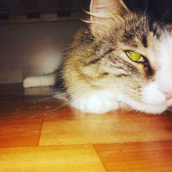 Забрался под кровать. Кисики, Кот, Усатый-Полосатый, Животные, Котомафия, Моё