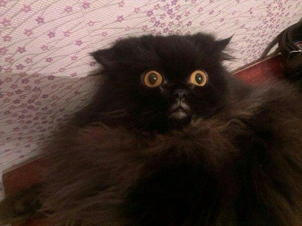 Вашему вниманию представляется губастый кот Кот, Губы, Фотография