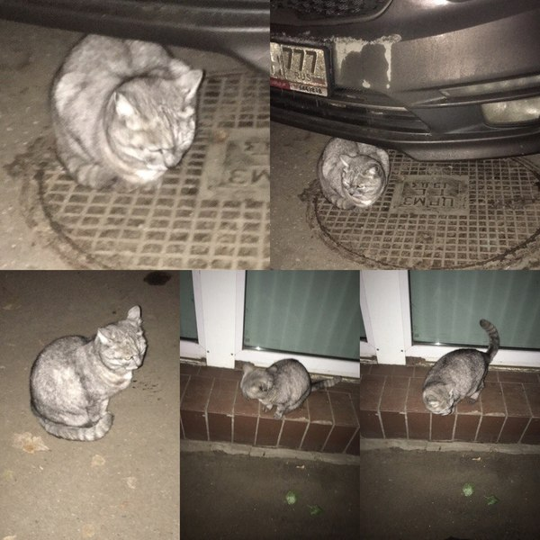 Помогите найти кошку Москва м.Бабушкинская Кот, Помощь, Москва, Бабушкинская, Летчика бабушкина, Потерялся кот, Кошка ищет дом, Кошка объебошка