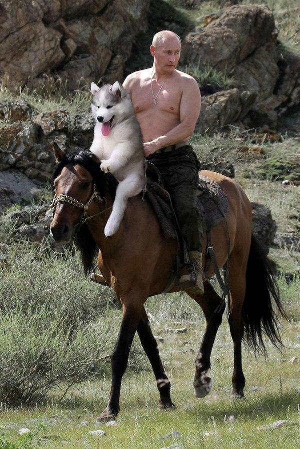 Путин видел свои фотографии верхом на медведе