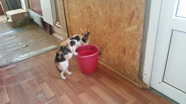 Дрессированные кошки... кот, Извинение, черный юмор, воду, пьет