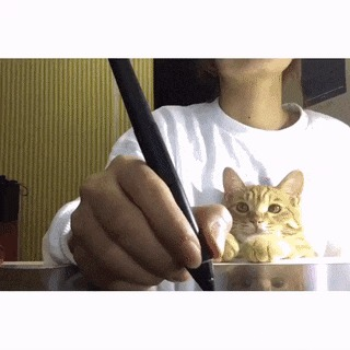 Кошки не терпят конкуренции Кот, Милота, Ревность, Внимание, Стилус, Ручка, Умрите!, Гифка