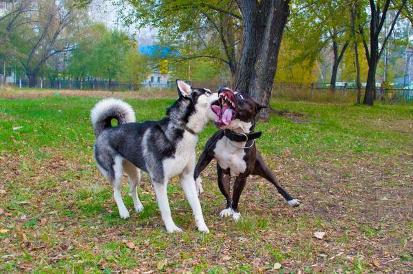 Милые целовашки двух собачек