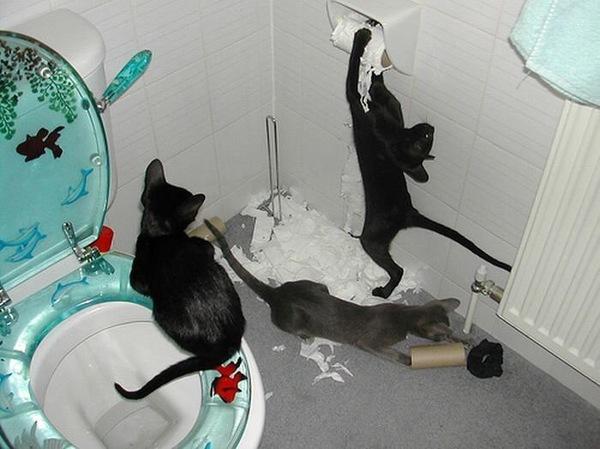Cat toilet kitchen