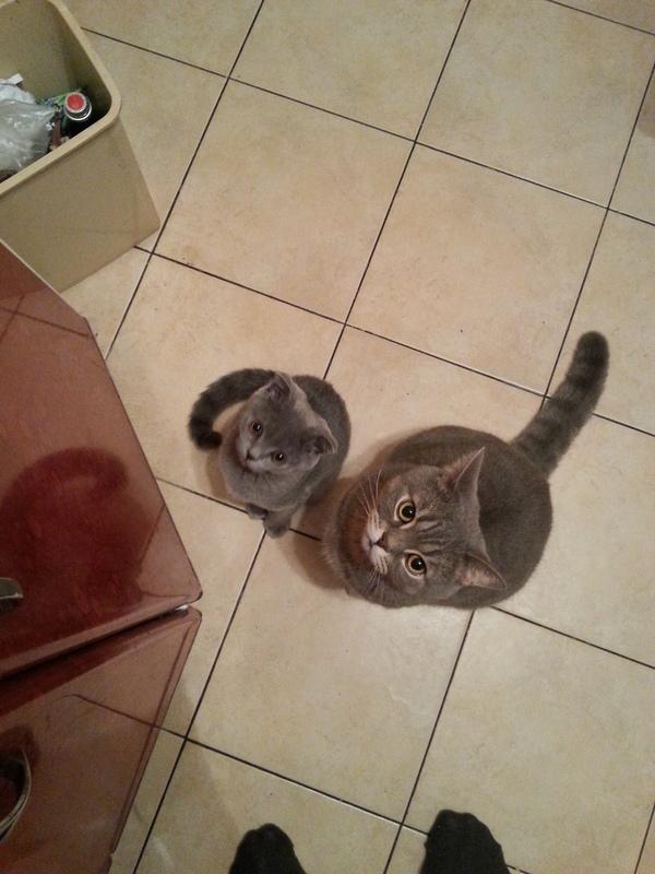 Попрошайки кот, мясо, жрать, длиннопост