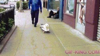 Зачем пачкать лапы, если есть скейт?