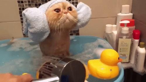 Принцесса Лея принимает ванну