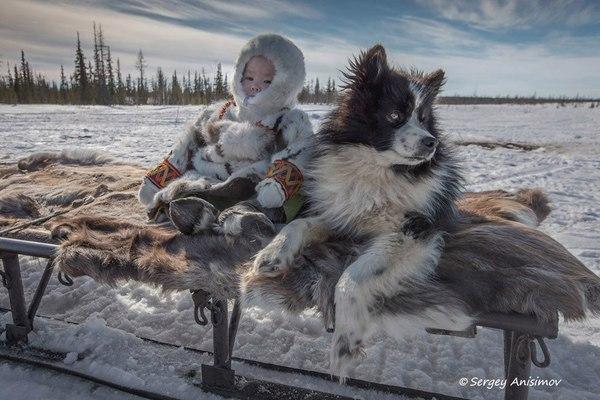 С верным другом Ямал, Россия, Ненцы, Фото, Природа, ноябрь, снег, собака