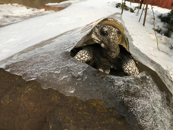 Я в домике Черепаха, Лёд, Холодно