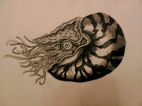 Nautilus. А3. Тушь, бумага.