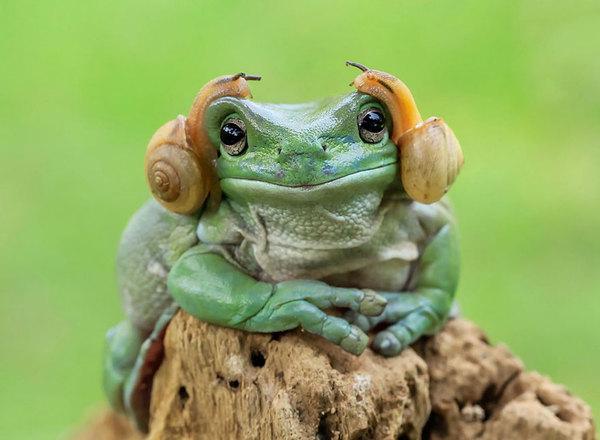 Принцесса Лея Животные, лягушка, лягушки, Улитка, принцесса лея