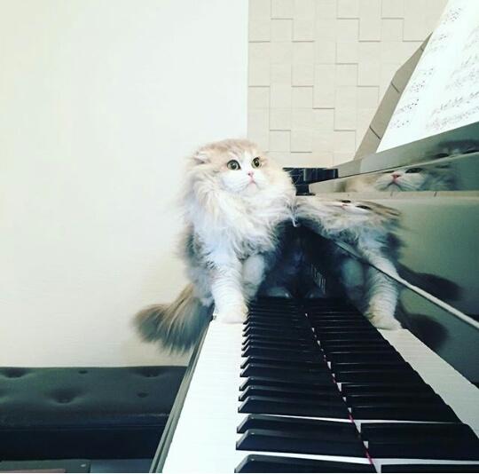 Когда родители заставили играть на фортепиано перед гостями