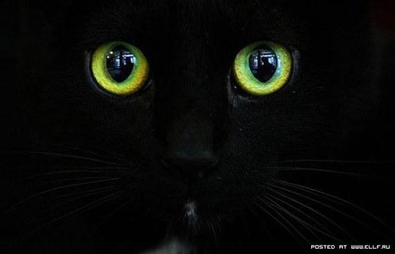 Про кота или про людей, вот в чем вопрос! :)) рассказ, история, авторский рассказ, Пантера, кот, зоопарк