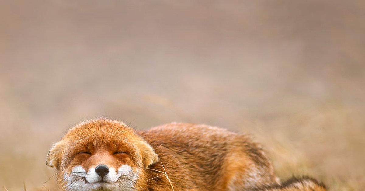 осенью, картинки стеснение животных того чтобы узнать