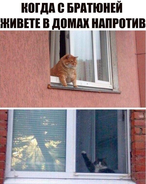Друг из соседнего дома Кот, ВКонтакте