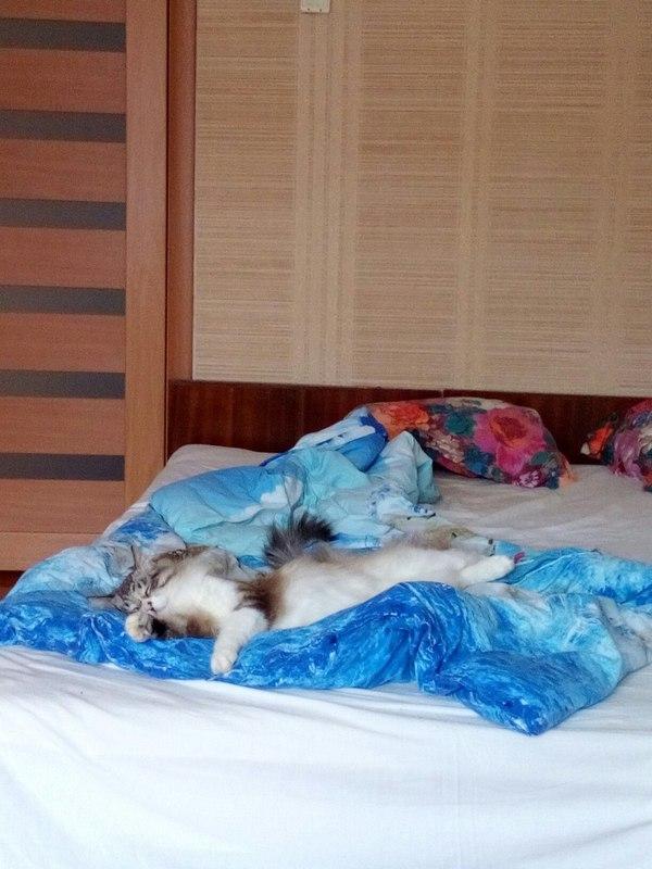 Хозяин кровати.