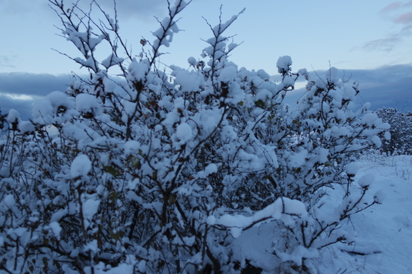 Зима в Ялте Зима, Крым, Длиннопост
