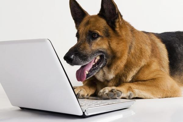 В поисках знаний Собака, дрессировка, книги, сайт, полезное, длиннопост
